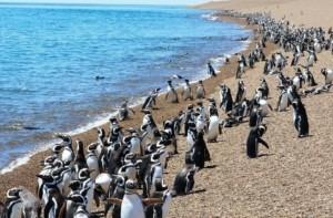 penguins excursion patagonia argentina