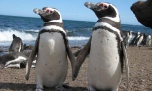 penguins patagonia argentina