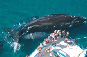 whales argentina patagonia excursion