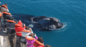 whales argentina patagonia